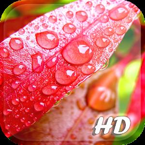 Falling Leaves Live Wallpaper Apk Spring Leaf Wallpapers Apk For Blackberry Download