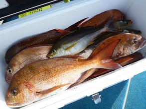 Photo: 釣果です。 おおつさんの釣果。 真鯛、イサキ・・・合計10匹ぐらいでした。