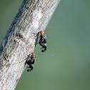 Bark Lice