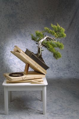 tipps und tricks bonsai club tirol bonsai tisch von sepp hofer. Black Bedroom Furniture Sets. Home Design Ideas
