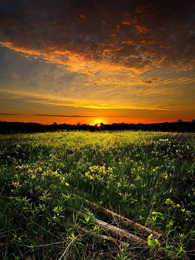 Morning Glorious by Phil Koch - Landscapes Prairies, Meadows & Fields ( vertical, summer. spring, wisconsin, natural light, photograph, environement, farmland, yellow, leaves, phil koch, spring, photography, sun, love, farm, nature, autumn, horizons, flowers, inspired, clouds, office, orange, green, twilight, agriculture, horizon, myhorizonart, scenic, morning, portrait, field, winter, red, national geographic, seasons, blue, sunset, serene, fall, peace, meadow, earth, sunrise, landscapes, floral, inspirational )