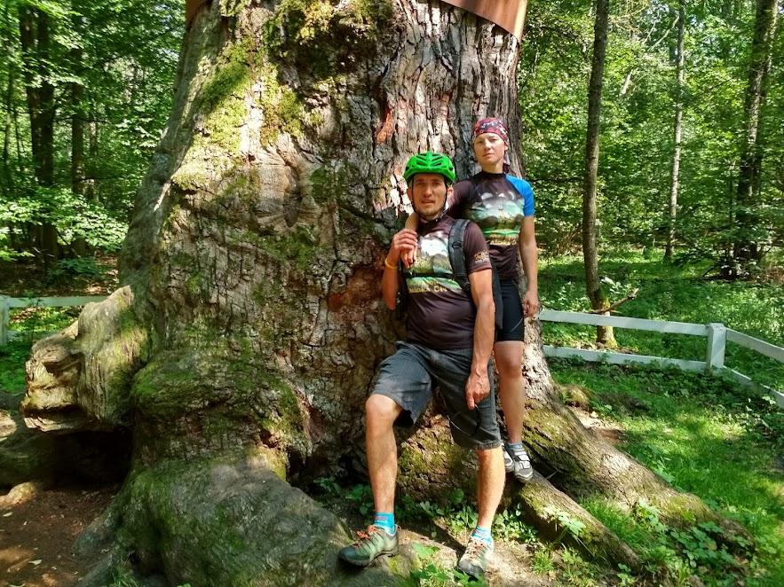 ми і Юзефінський дуб