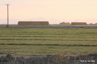 Photo: (Year 3) Day 36 - More Hay Bale Storage