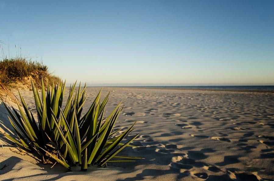 Quiet by Jeff Dugan - Landscapes Beaches ( oak island, seascape, landscape, north carolina )