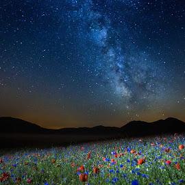 Fiori sotto la Via lattea by Pasquale Bimonte - Landscapes Starscapes