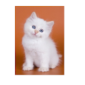 cute kittens icon