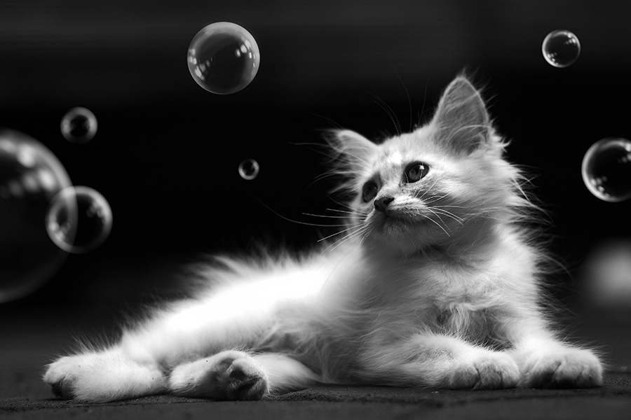 Kitty and The Bubbles #2 by Langgeng Arief Utomo - Animals - Cats Portraits