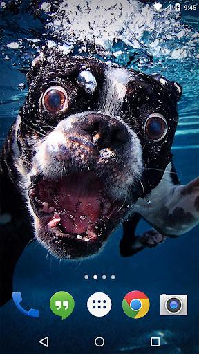 水中犬のライブ壁紙