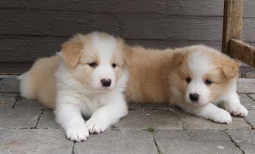Photo: 20.06.2011 Kenzo met zijn broertje  5 weken