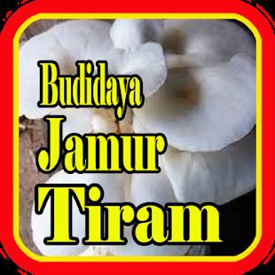 Budidaya Jamur Tiram - náhled