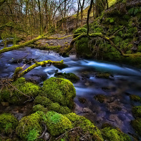 A river runs through  by Steve BB - Nature Up Close Trees & Bushes ( stream, janets foss, green, moss, forest, woods, lichen, malhamdale, blue, yorkshire, malham, trees, beck, rocks, river )