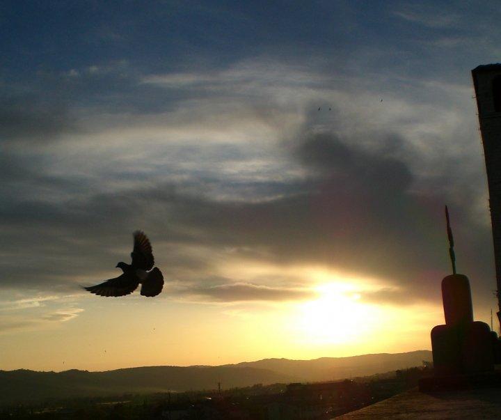 Volo nel tramonto di AnnaMaria
