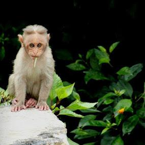 by Nirmal Kumar - Animals Other Mammals