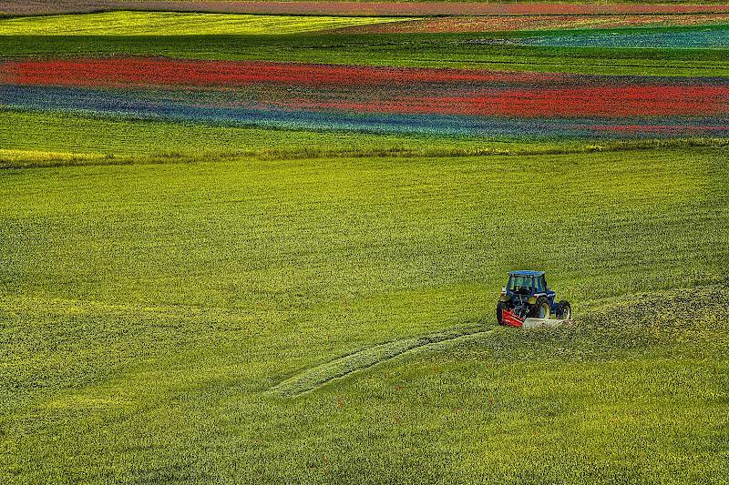 Lavoro di primavera di paolo1954