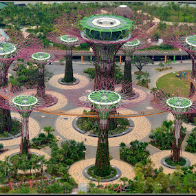 Supertrees Singapore by Dalibor Bakac - City,  Street & Park  Amusement Parks