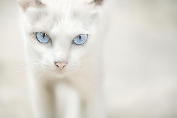 Blue Eyes di Roberto Pazzi Photography