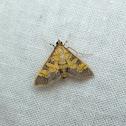 Paler Diacme Moth
