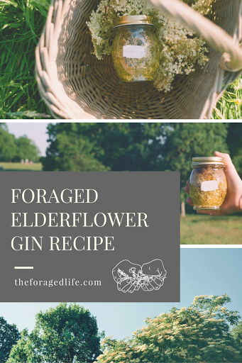 Simple foraged elderflower gin recipe | The Foraged Life