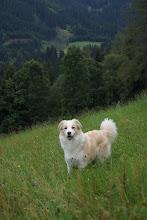 Photo: Ramsau  wandeling,  rennen en spelen op de berg Indy