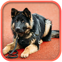 Fantastic Police Dog icon