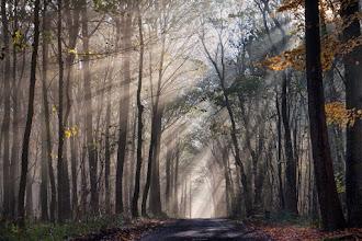 Photo: Natuur Bos met mooi lichtinval. Foto: Peter Reinders.