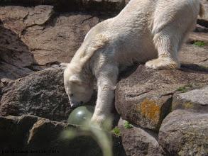 Photo: Katjuscha untersucht den Ball ;-)