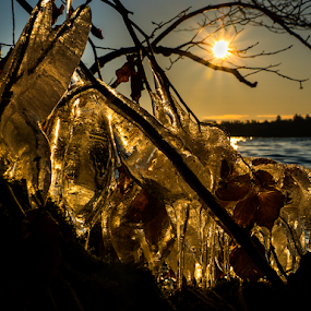 Golden ice by Peter Samuelsson - Nature Up Close Water