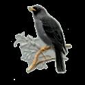 Ptaki Polski icon