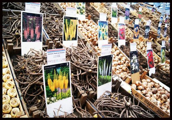 I fiori al mercato.... di virgiss