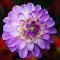 IMG_3959-1pix.jpg