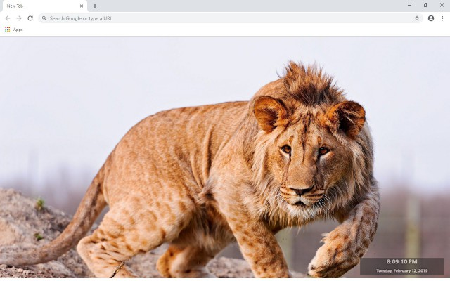 Liger New Tab & Wallpapers Collection