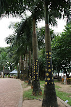 Photo: Year 2 Day 54 -  Decorated Trees at Kandawgyi Lake in Yangon