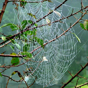 Orb Spider Web by Elaine Tweedy - Artistic Objects Other Objects ( spider, web )