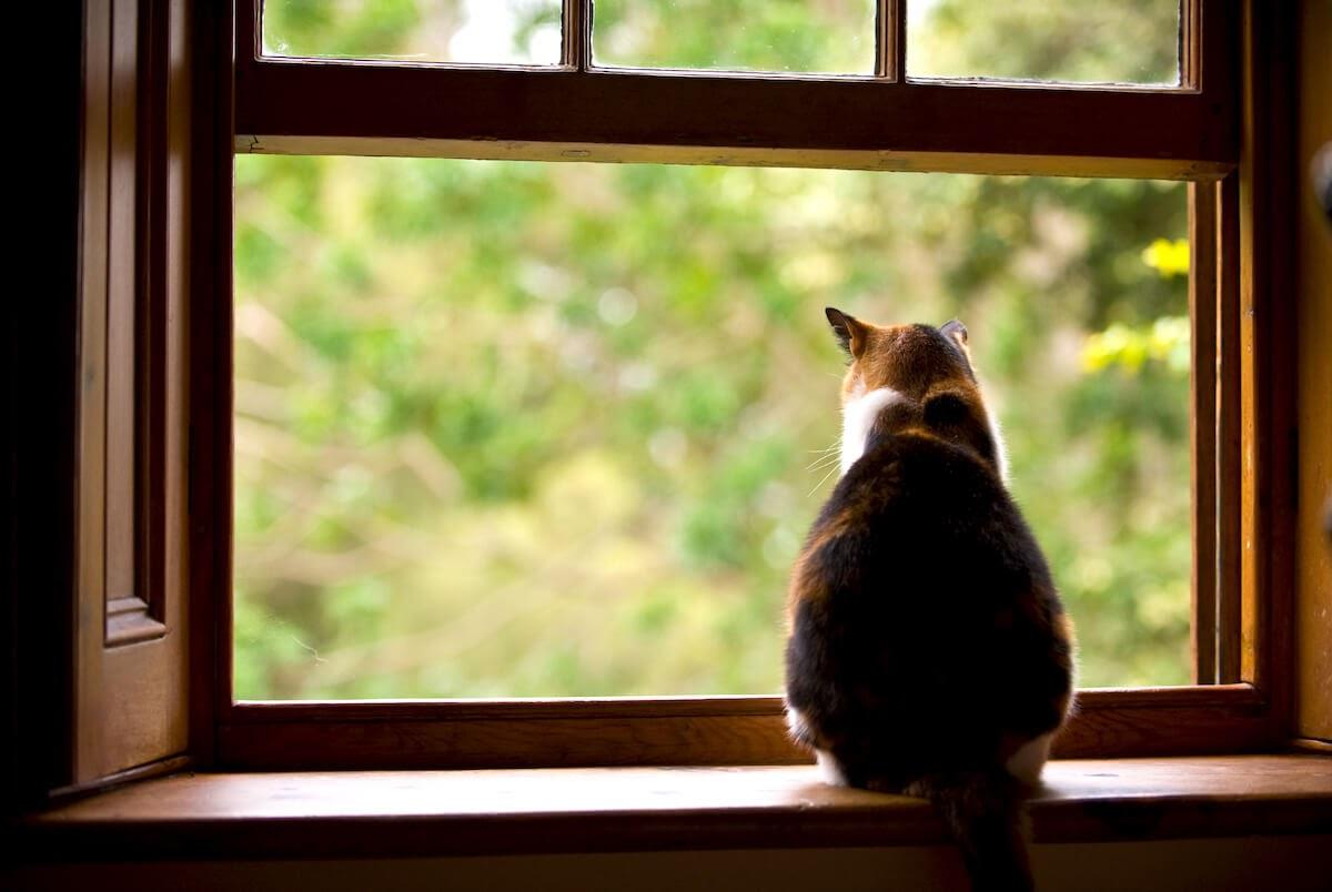 les chats apprécient les points en hauteur pour observer leur territoire