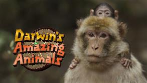 Darwin's Amazing Animals Manul thumbnail
