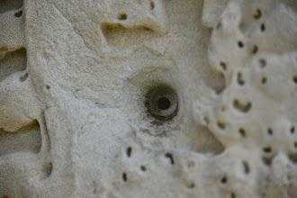 Photo: 23- Pan ! ce mur sculpté garde intact un impact de balle datant vraisemblablement de la période Khmer rouge. Il n'y a que relativement peu de temps que les abords des temples ont été déminés.