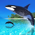 Whale Live Wallpaper APK