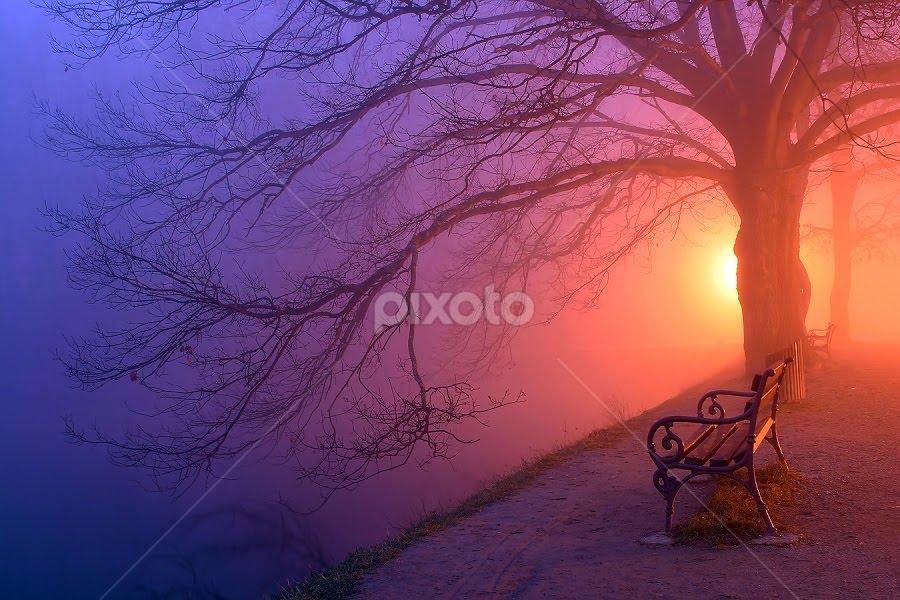 by Jasenka LV - Landscapes Forests ( , Tree, Nature, Sky, World_is_Blue )