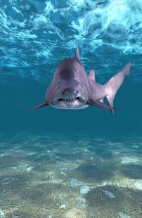 Shark Attack Live Wallpaper Apps On Google Play