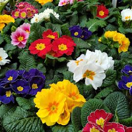 by Tiffany Wu - Flowers Flower Buds