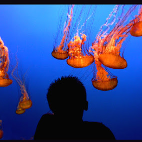 Lost in Jelly Worlds by Lee McLaughlin - Landscapes Underwater ( water, under water, fish, aquarium, jelly-fish, ocean, jelly, ponder )