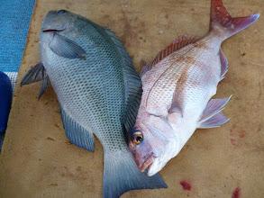 Photo: クチブトと真鯛!