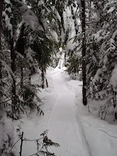 Photo: Snowshoe trail