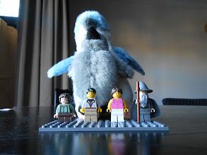 Photo: Cuidado con los pingüinos