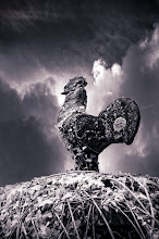 Photo: Cock 'O the Roost (Clive Haynes)