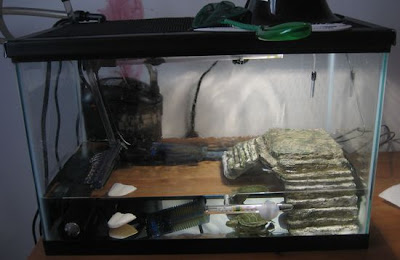Current Set Up Pet Turtles And More