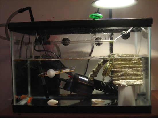 Rearranged The Turtle Tank Pet Turtles And More