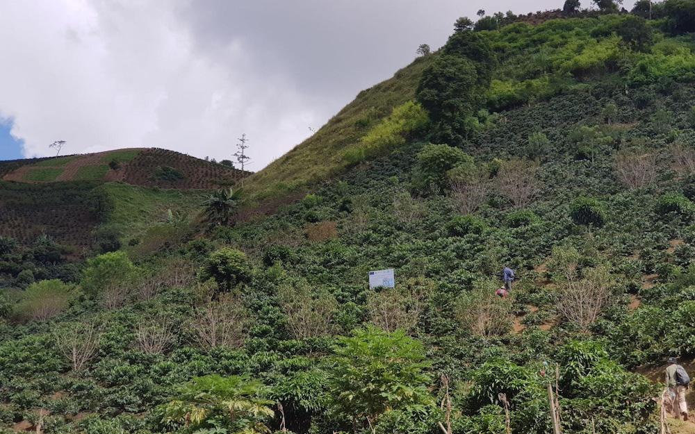 coffee farm in Vietnam