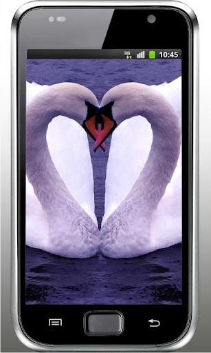 Swans Great Gallery LWP