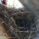 Abandon Nest
